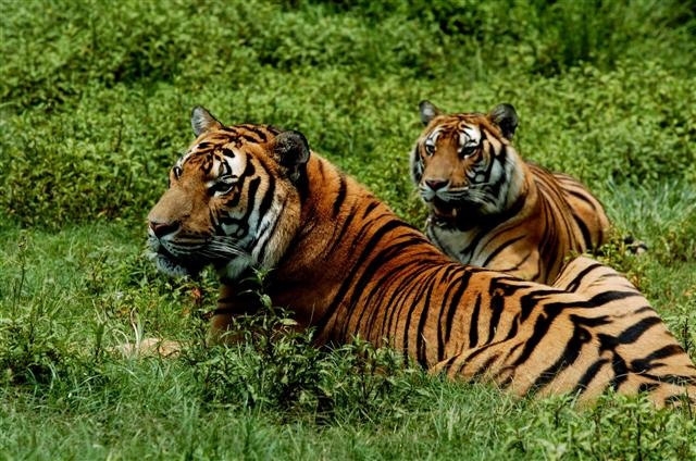 Travel to Meihua Mountain to watch the South China Tiger in its Habitat